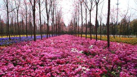 花仙子林下花园
